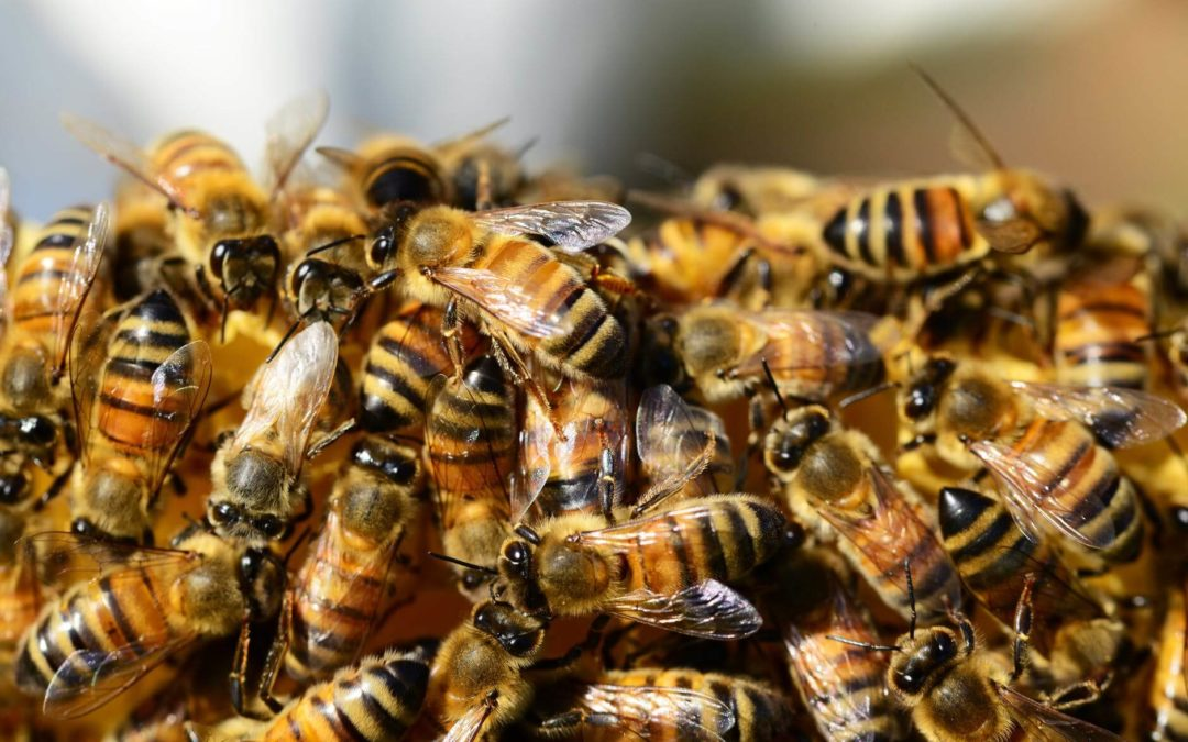 Neonics – It's Bigger than the Bees