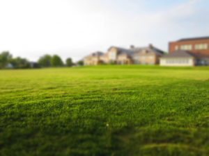 Lawn free of pesticides