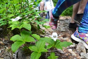 Kids walking in Nature - BC parks foundation